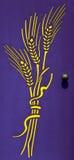 Spighe del granoturco gialle su una porta viola Immagini Stock