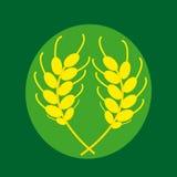 Spighe del granoturco su un fondo verde Immagini Stock Libere da Diritti