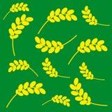 Spighe del granoturco su un fondo verde Fotografia Stock Libera da Diritti
