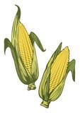 Spighe di frumento illustrazione vettoriale