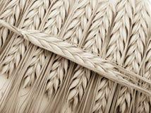 Spighe di frumento del grano fotografia stock
