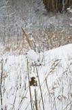 Spighetta nella neve immagine stock