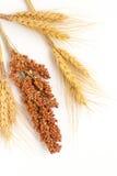 Spighette di grano e del ramoscello gialli di sorgo Fotografie Stock