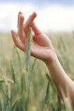 Spighette nelle palme della donna Immagine Stock Libera da Diritti
