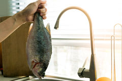 Spigola dopo la pulizia - aspetti per cucinare Fotografie Stock Libere da Diritti