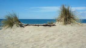 Spiguette ‰ παραλιών là στο Camargue - τη Γαλλία Στοκ εικόνες με δικαίωμα ελεύθερης χρήσης