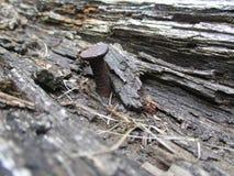 Spijker in het hout Stock Foto's