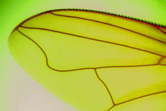 Spijker zonder kop op groene achtergrond Stock Afbeeldingen