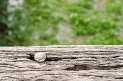 Spijkerhoofden (roestig, oud) op hout in het achtergrondonduidelijke beeld worden genageld dat Royalty-vrije Stock Foto's