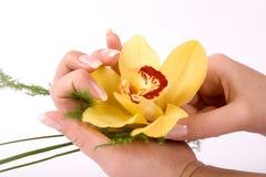 Spijkers met bloem Royalty-vrije Stock Foto's