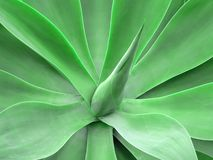 Spike. A closeup of a tropical plant Stock Images