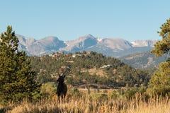 Spike Bull Elk Silhouetted Stock Photo