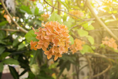 Spike flower orange closeup sunlight nature background Royalty Free Stock Photos