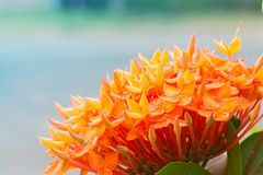 Spike flower in outdoor.  stock photos