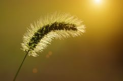 Spike grass steppe in sunset Royalty Free Stock Photos
