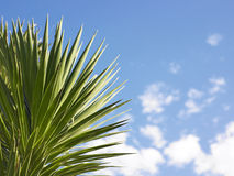 Spike-Leafed Plant Stock Image