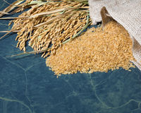 Spike rice and brown rice uncooked. Brown rice uncooked in a bag with a pile of brown rice and spike rice on table background Royalty Free Stock Photo