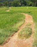 Spike in rice farm Stock Photo