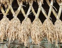Spike rice wall Stock Photo