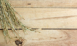 Spike rice on Wood Background. Stock Photos