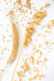 Spike of wheat and wheat grains. Ears of oats and oat grains Stock Photo