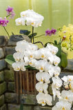 Spike of white orchids Royalty Free Stock Photos