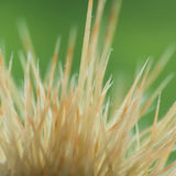 Spiked. An abstract macro shot of some cactus spines stock photos