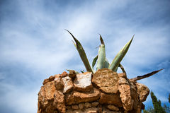 Spiked Plant in Rocky Planter Against Blue Sky Royalty Free Stock Images
