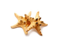 Spiked sea stars Stock Images