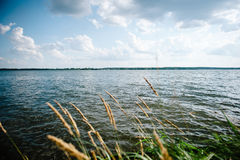 Spikelet på sjöbakgrunden Arkivbilder