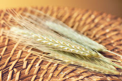 Spikelet Wheat Royalty Free Stock Photo
