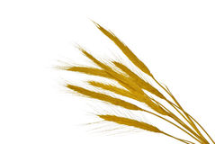 Spikelets. Yellow spikelets as a symbol of harvest Stock Images