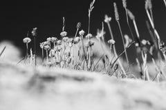 Ξηρές λουλούδια και χλόη στον απότομο βράχο στοκ εικόνες