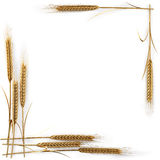 Spikelets Stock Photos
