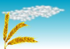 Spikelets Stock Image