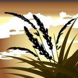 Spikelets e a grama contra o céu Fotos de Stock Royalty Free