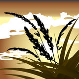 Spikelets and the grass against the sky Royalty Free Stock Photos