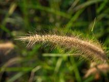Spikelets no campo no por do sol fotos de stock