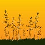Spikelets no por do sol Imagens de Stock