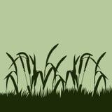 Spikelets och gräset mot himlen Fotografering för Bildbyråer