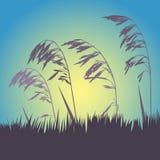 Spikelets och gräset mot himlen Arkivfoton