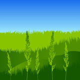 Spikelets på bakgrunden av gräs Arkivfoto