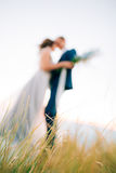 Spikelets w polu przy zmierzchem Tekstura trawa przy zmierzchem zdjęcia stock