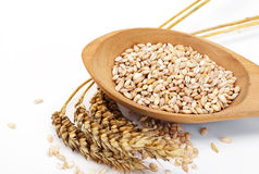 Spikelets of wheat. Mature ear of wheat grain Stock Image