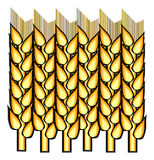 Spikelets of wheat Stock Image