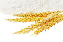 Spikelets of wheat on flour spillage. Royalty Free Stock Photos