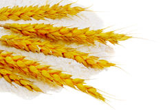 Spikelets of wheat on flour spillage.Isolated. Royalty Free Stock Photography