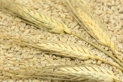 spikelets wheat; grains; cereals; grains; seeds; harvest Stock Image