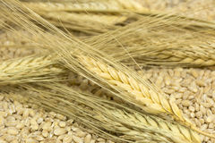 spikelets; wheat; grains; cereals; grains; seeds; harvest; food Royalty Free Stock Photos