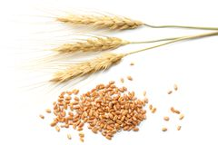 spikelets of wheat isolated on white background. top view Stock Photo